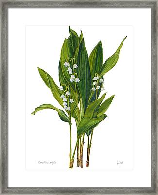 Lily Of The Valley - Convallaria Majalis Framed Print by Janet  Zeh