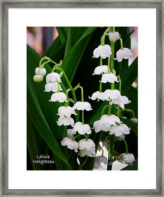 Lily Of The Valley Framed Print by Lainie Wrightson
