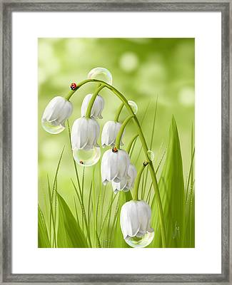 Lily Of The Valley Framed Print by Veronica Minozzi