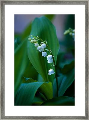 Framed Print featuring the photograph Lily Of The Valley by Wayne Meyer
