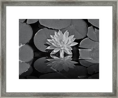 Lily On The Pond Framed Print