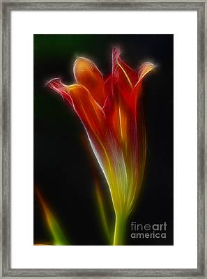 Lily Opening-5964 Framed Print by Gary Gingrich Galleries