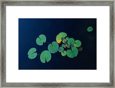 Lily Pad 2 Framed Print by Steven Clipperton