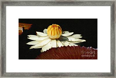 Lily Pad Framed Print by Diane E Berry