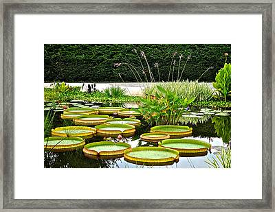 Lily Pad Garden Framed Print by Frozen in Time Fine Art Photography
