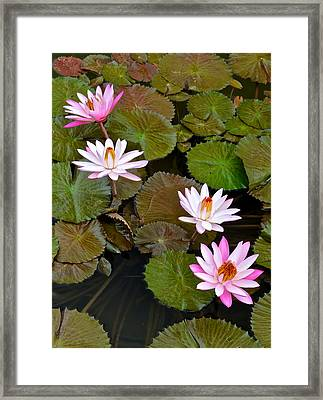 Lily Pad Haven Framed Print by Frozen in Time Fine Art Photography