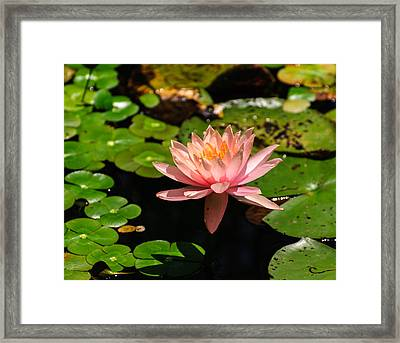 Framed Print featuring the photograph Lily Pad by John Johnson