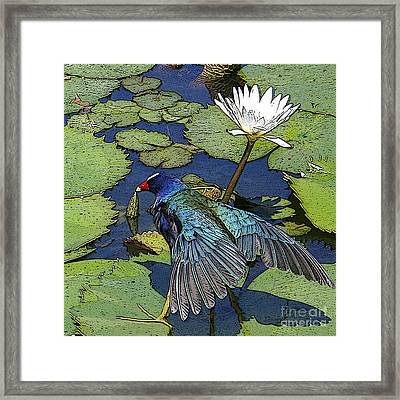 Lily Pad With Bird Framed Print