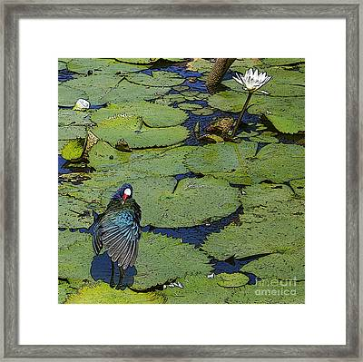 Lily Pad With Bird2 Framed Print