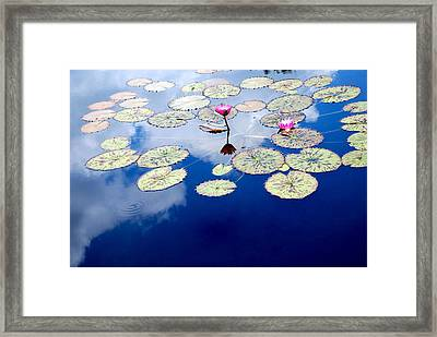Lily Pads -  A Floating World Framed Print