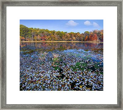 Lily Pads And Autumn Leaves Framed Print by Tim Fitzharris