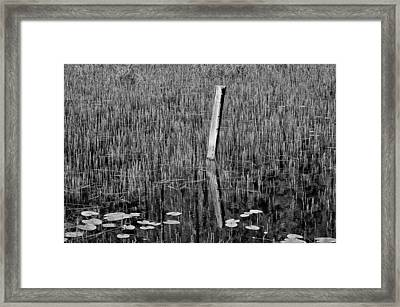 Lily Pads And Reeds Framed Print by Allan Van Gasbeck