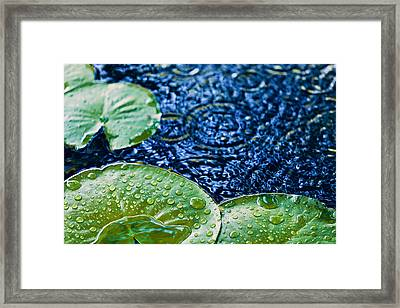 Lily Pads Framed Print by Debi Bishop
