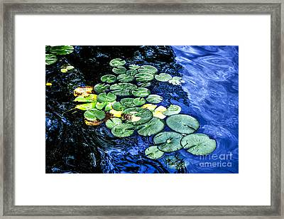 Lily Pads Framed Print by Elena Elisseeva
