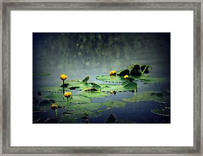 Lily Pads In The Rain At Vernonia Lake Framed Print by Dawna Morton