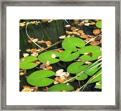 Lily Pads Framed Print