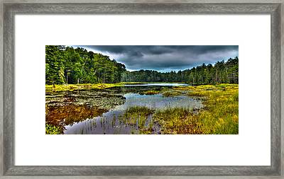 Lily Pads On Fly Pond Framed Print by David Patterson