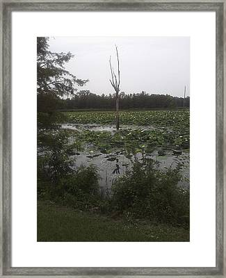 Framed Print featuring the photograph Lily Pads by Fortunate Findings Shirley Dickerson