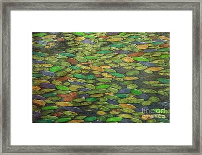 Lily Pads Framed Print by Tom York Images