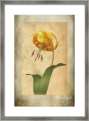 Lily Painting With Textures Framed Print by John Edwards