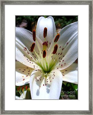 Lily Framed Print by Patti Whitten