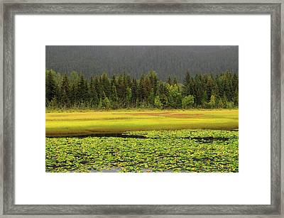 Lily Pods And Sedge Grass In Autumn Framed Print