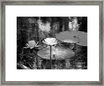 Lily Pond 2 Framed Print by Anita Lewis