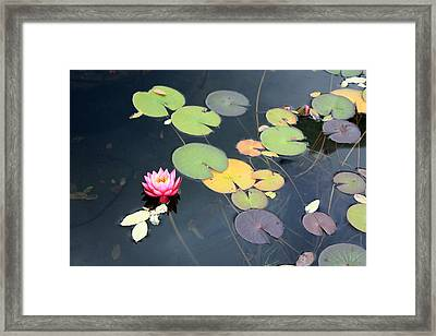 Lily Pond Framed Print by Gerry Bates