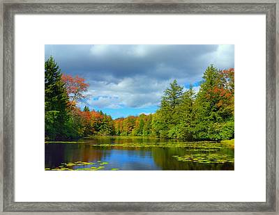 Lily Pond Framed Print