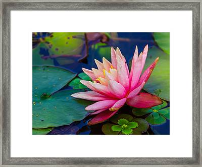 Framed Print featuring the photograph Lily Pond by John Johnson