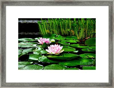 Framed Print featuring the photograph Lily Pond by John S