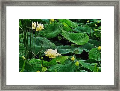 Lily Pond Framed Print by Julie Grace