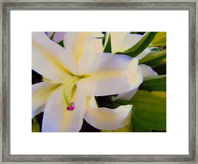 Lily Portrait Framed Print