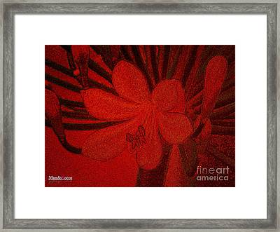 Lily Red Framed Print