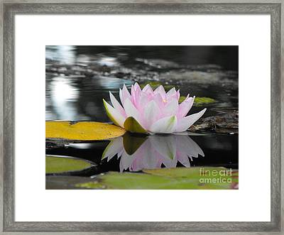 Lily Reflection Framed Print by Erick Schmidt