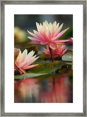 Lily Reflections 2 Framed Print
