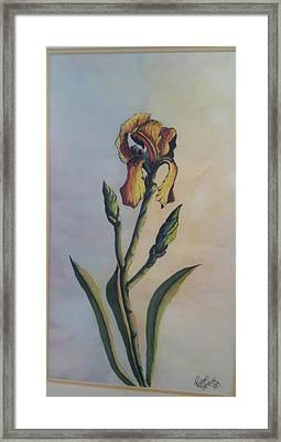 Lily Sold Framed Print