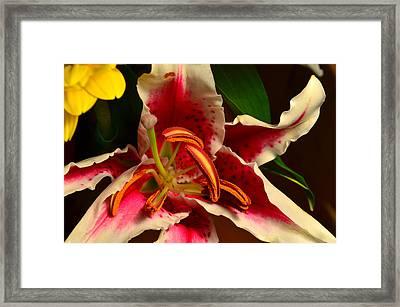 Lily Rose Flower 2 Framed Print