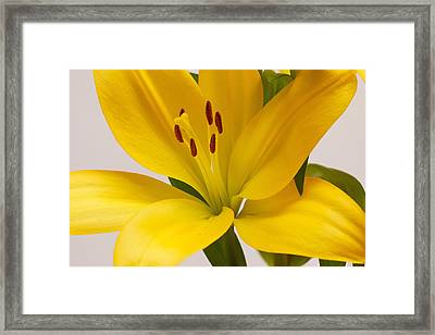Lily Framed Print by Scott Carruthers