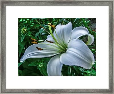 Lily Framed Print by Skip Tribby