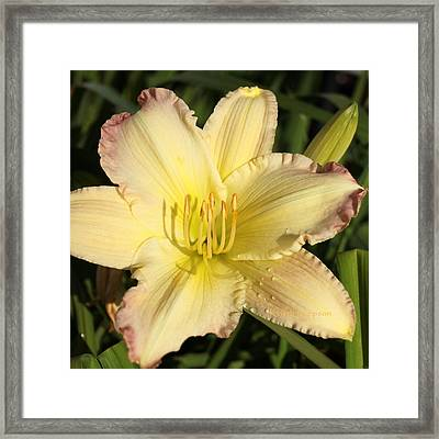 Lily Square Framed Print