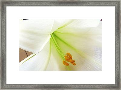 Lily Stamen Framed Print by Fortunate Findings Shirley Dickerson