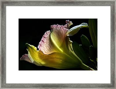 Lily Study I Framed Print by Michael Friedman