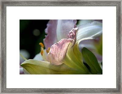 Lily Study II Framed Print by Michael Friedman