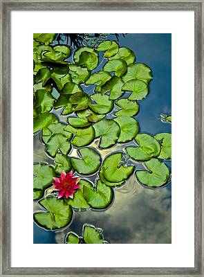 Pacman Lily  Framed Print by Thomas Camp