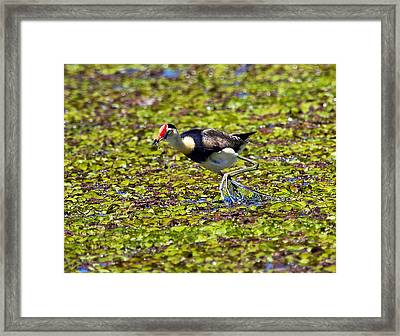 Lily Trotter Doing What They Do Framed Print