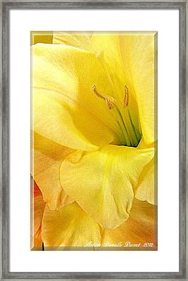 Lily Velour   Framed Print by Danielle  Parent