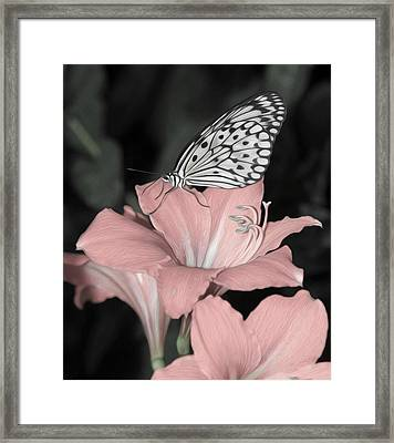 Lily With Butterly  Framed Print