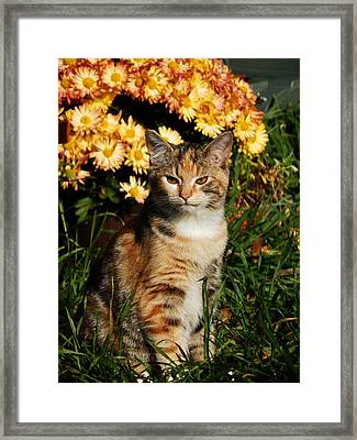 Lily With Harvest Mums Framed Print by VLee Watson