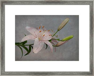 Pink Lily With Texture Framed Print
